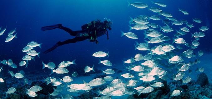 Responsabilità civile e penale delle attività subacquee <span class=