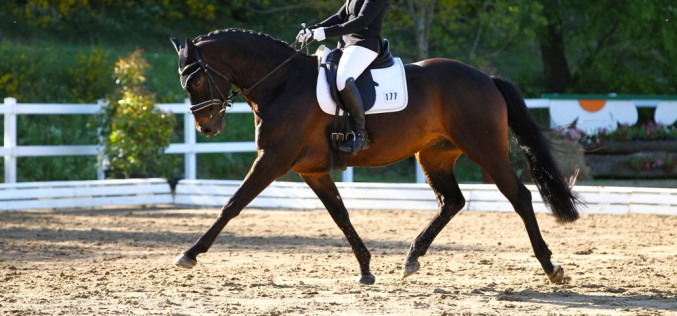 Western and English Dressage, il 16 dicembre al via l'Ice Trophy