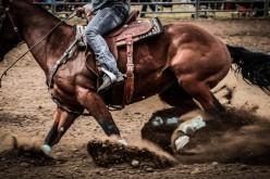 Equitazione americana, il 3 marzo in Lombardia parte il Regional Championship Reining e Performance