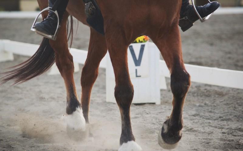 Western and English Dressage: in Lombardia il 10 marzo c'è il clinic, il 14 aprile il via al Campionato