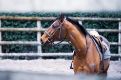 Equitazione americana, il 7 aprile parte il Campionato regionale di Reining del Piemonte