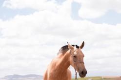 Equitazione americana, Mino Spadacini, tecnico di ISHA, presenta il suo ultimo libro