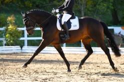 Equitazione americana, i campionati regionali di Western & English Dressage entrano nel vivo