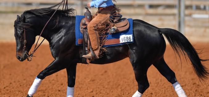 Equitazione western, ad agosto il primo European Championship di Gimkana organizzato da ISHA