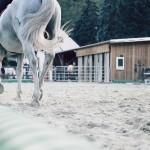 xl marzo cavallo ok