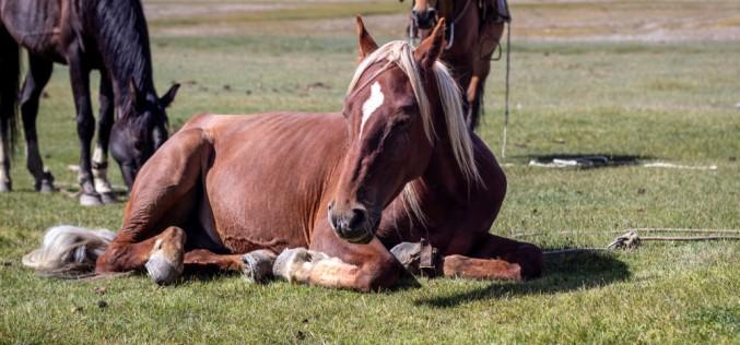 Natural Horse Championship, altri 3 appuntamenti a settembre ed ottobre tra Lombardia, Emilia Romagna e Liguria