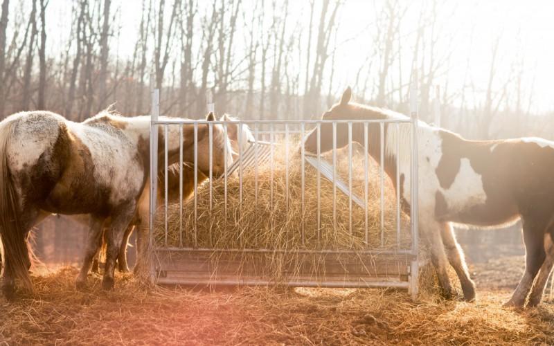 Equitazione western, ad ottobre partono i corsi per Accompagnatore e Palafreniere/Groom
