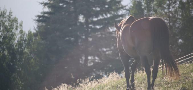Equitazione, a settembre corso di someggiatura