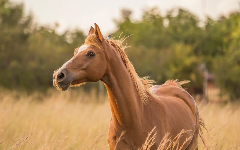 Festa dello Sport a Cafasse con il cavallo protagonista