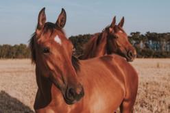 Equitazione, il Natural Horse Championship arriva a Savignano
