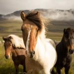 equitazione, corso assistente tecnico di base