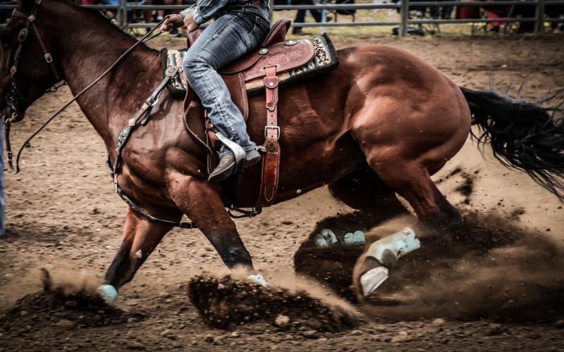 Equitazione western: il 22 settembre ritorna l'entusiasmante Two Penning