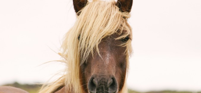 Equitazione, il progetto Horse Natural Championship si arricchisce di 4 nuovi appuntamenti