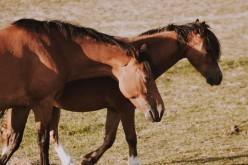 """Horse Natural Championship, """"Tony"""" Trausi presenta il Campionato Mix Trail 2020"""