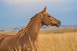 Parte dall'Emilia Romagna il torneo 2020 dell'Horse Natural Championship