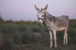 Al Ranch Margherita i corsi per Assistente di Base e per Tecnico di Attività con asini