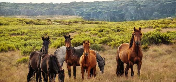 """Equitazione, il nuovo anno dell'Horse Natural Championship di Franco """"Tony"""" Trausi"""