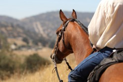 Sport Equestri, come comportarsi durante l'emergenza coronavirus