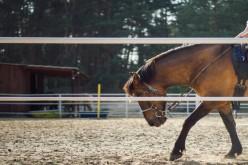 Sport Equestri, le linee guida per ripartire dal 18 maggio