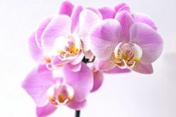 """Le Associazioni OPES accanto ad Unicef nella campagna nazionale """"Per la Festa dei Nonni regala un'Orchidea"""""""