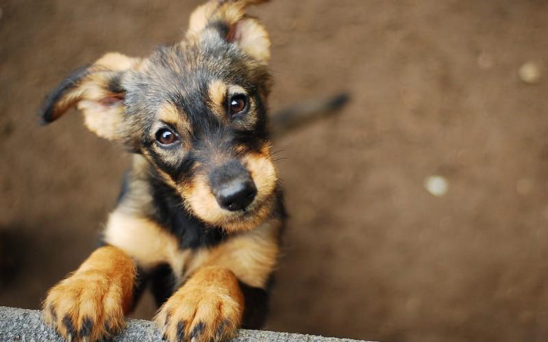 Cinofilia, da ottobre il corso per Tecnico Cinofilo in Puppy Class