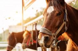 Equitazione: a novembre inizia il corso di formazione per tecnici e istruttori