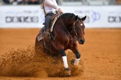 Equitazione: le competizioni di Reining e Performance si svolgeranno al Peschiera Quarter Horses