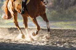 Equitazione, l'8 e il 9 maggio il seminario con il campione Mirko Midili