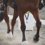 corso istruttori equitazione