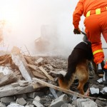 Search,And,Rescue,Forces,Search,Through,A,Destroyed,Building,With
