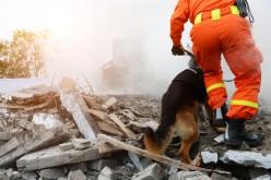 """Siracusa: parte il corso per """"Istruttore figurante per cane da soccorso in protezione civile"""""""