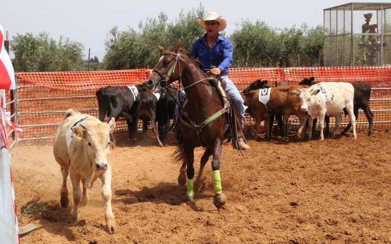Equitazione americana: il Two Penning scopre in Sicilia un fervido movimento